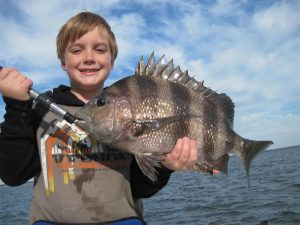 big sheepshead
